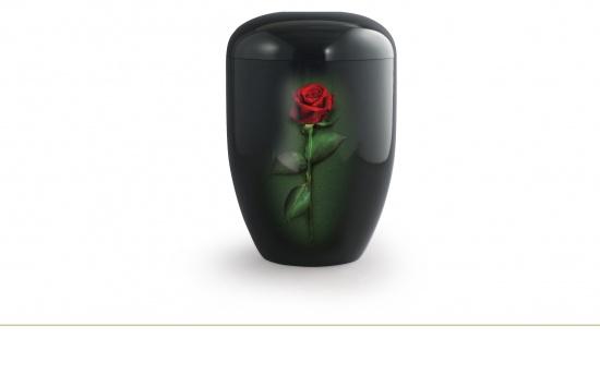 Rote Rose   <small>(U29)</small>